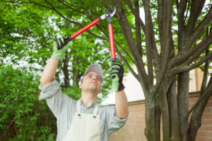 Professionals also know where to cut the branches, so that the tree doesn't suffer.