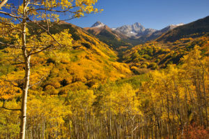 America houses the oldest living colony of trees, called the Pando colony of Quaking Aspen in Utah.  Their root system is estimated to be--get this--over 80,000 years old!