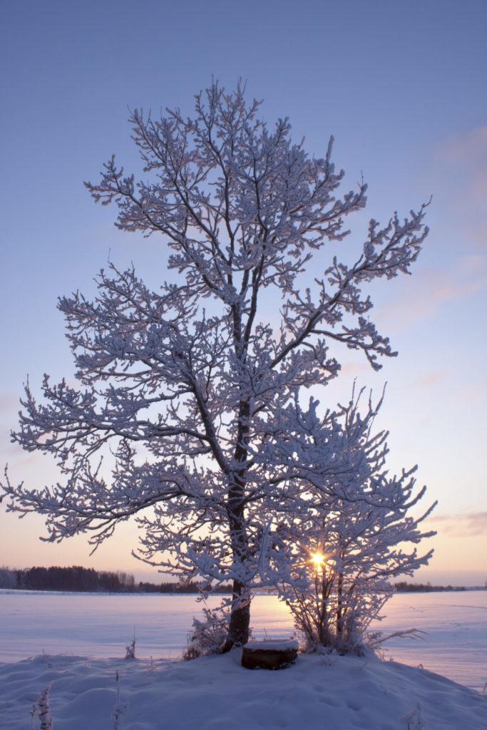 Ice-covered tree, Maryland-Washington, DC, Nelson Tree Specialist
