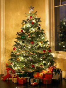 A Guide to the Top 10 Most Popular Live Holiday Trees