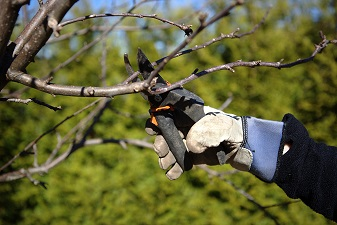 Hand clipping limb, Maryland-Washington, DC, Nelson Tree Specialist