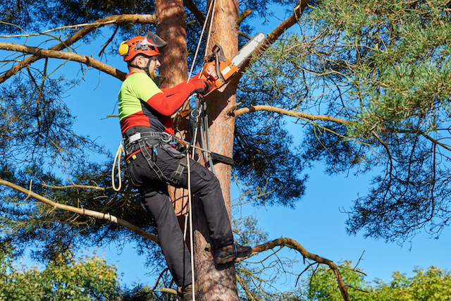 Man chainsawing in tree, Maryland-Washington, DC, Nelson Tree Specialist