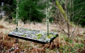 Choosing a Tree for Your Tree Swing
