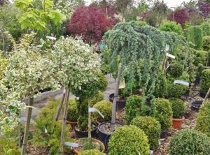 Selecting Your New Trees