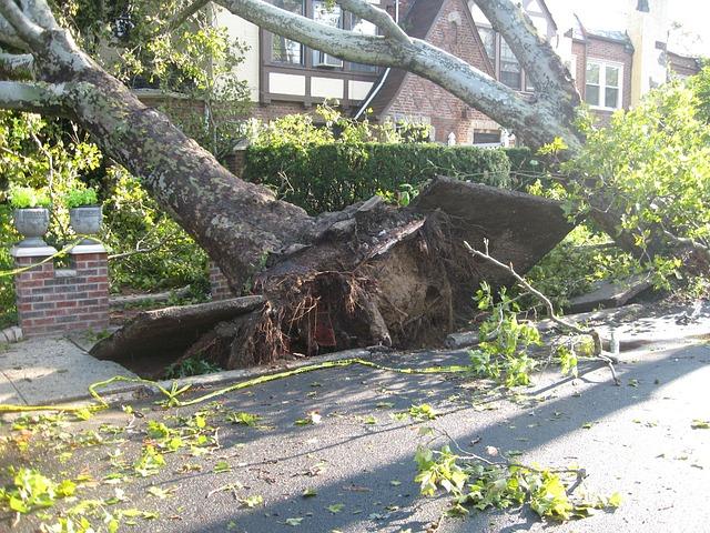 A tree falling and destroying a sidewalk