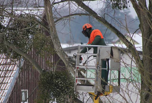 Tree pruning, Maryland-Washington, DC, Nelson Tree Specialist