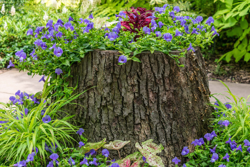 tree stump grinding and repurposing