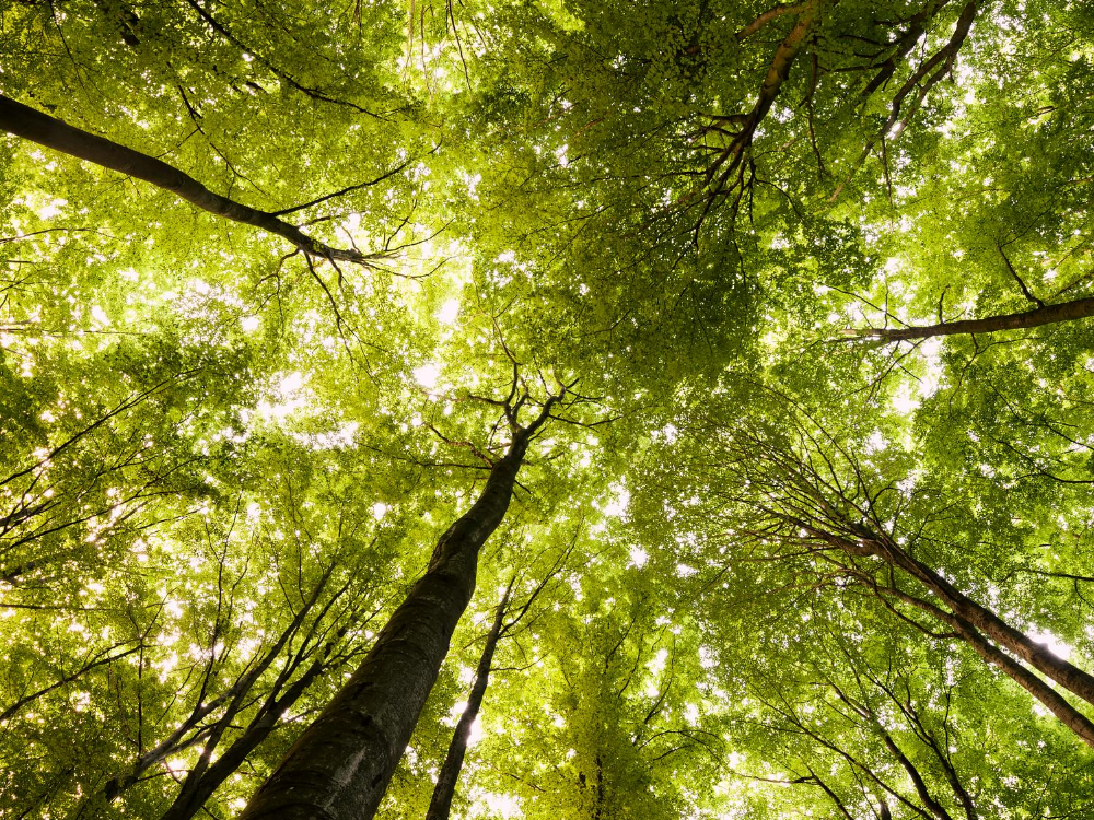 Environmental Benefits of Trees