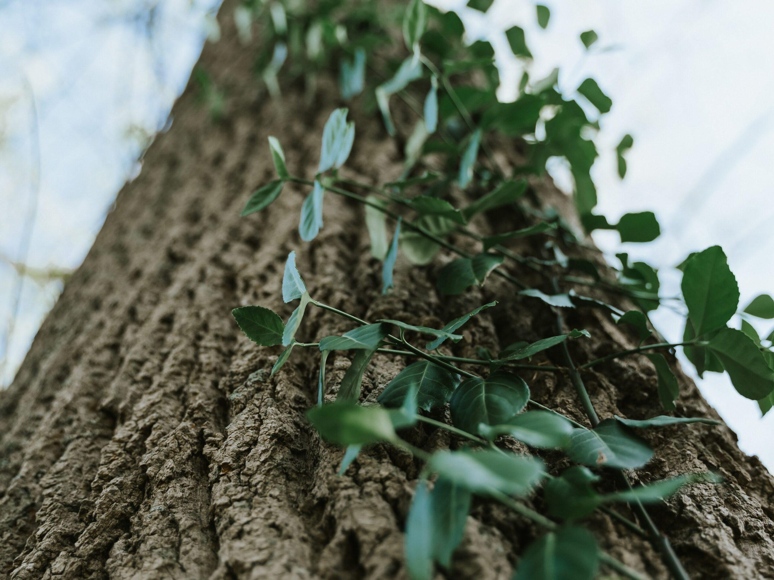 Maryland Native Trees, Cabin John Regional Park